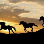 Galloping wild horses at sunset